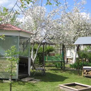 Яблони в цвету! Начинается наш 28 дачный сезон!