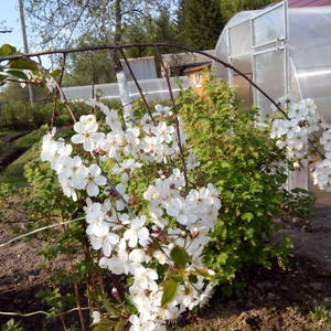 Весна на даче - теплицы готовы!