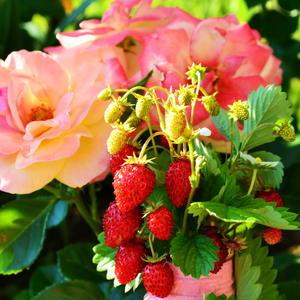 Яркие краски уДачного лета