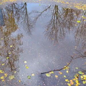 Дождик шел у нас с утра, сделал лужу средь двора....:)