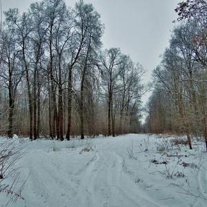 На прогулке в зимнем лесу