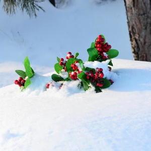 Зимняя клюква