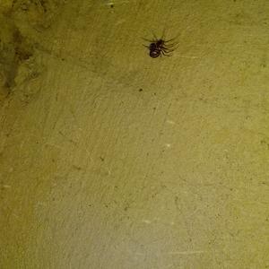 Подскажите, что за паук и не ядовитый ли он???