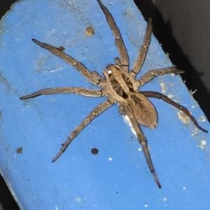 Что за паук? Фото кабардинка Краснодарский край