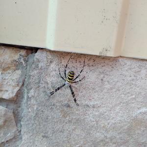 Подскажите, что это за паук и ядовитый он или нет?