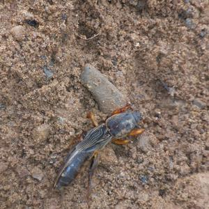 Как зовут это насекомое?)