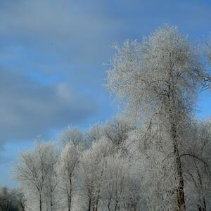 Вот и середина Зимы