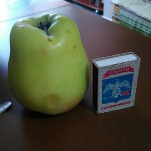 Какой это сорт яблок?