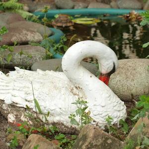 Нежный лебедь опустил свою головку