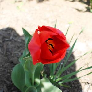 Красный и прекрасный)