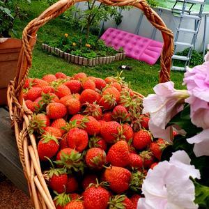 Любимая ягода