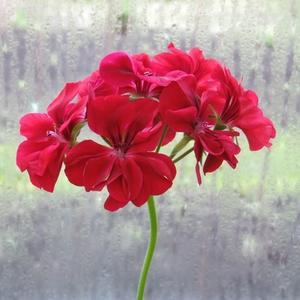 За окном дождь, а в окне лето красное