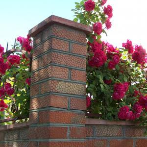 Любопытные розы... Всё-то им знать надо, что за забором делается)