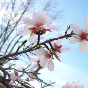 Нежный персик на фоне неба