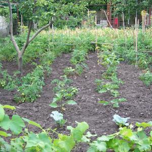 Огород-огород, что-то туго все растёт.....