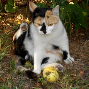 Мррр! Мое яблочко!