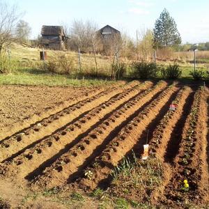 Новая плантация клубники