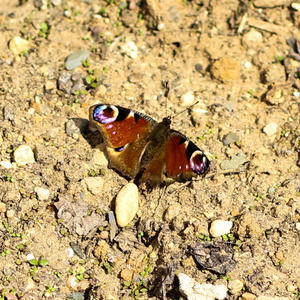 А вот и бабочка...
