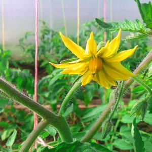 Первые цветы