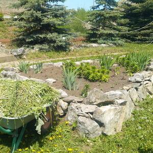 Травку скосили, клумбу засадили