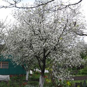 Наша дача весной