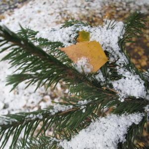 Скоро зима....