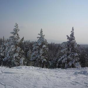 Чародейкою Зимою, околдован, лес стоит