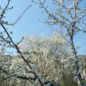 Весна в южном городе