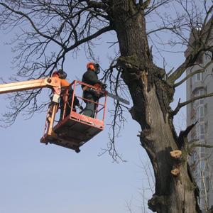 Убираем высохшие деревья