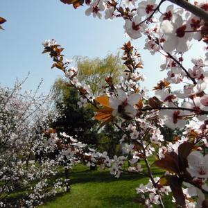 Цветущие красавицы на весеннем балу