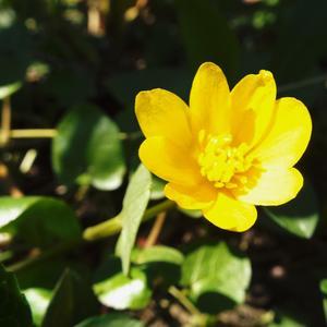 Яркий, желтенький цветочек, он в траве, как огонечек)