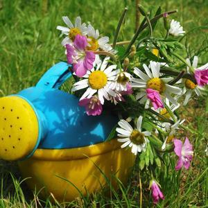 Очарование полевых цветов...
