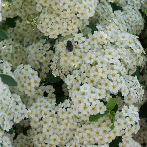 Что ты делаешь здесь, муха? Я пришла цветы понюхать!