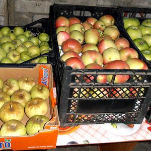 Зимние яблочки сложены для зимовки