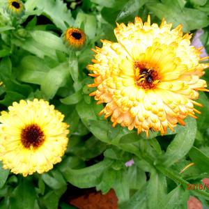 ....цветут, радуя глаз