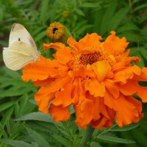 Цветы как бабочки, а бабочки - цветы. Летят над нашей жизнью легкокрыло и падают, срываясь с высоты...