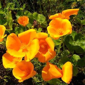 Оранжевое лето!