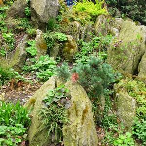 Каменистый садик