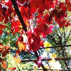 Осенние листья...