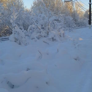 Зимние сюжеты