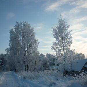 Легкий морозец украсил деревья