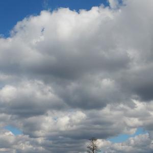 Плывут низко облака, цепляясь за деревья