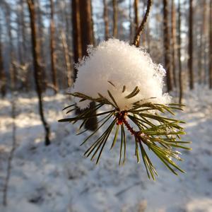 Солнце пригревает, снег потихоньку тает