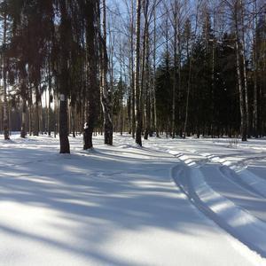 По свежему снежку