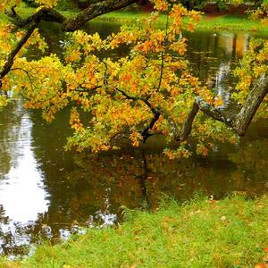 Подари нам, осень, чудные мгновенья