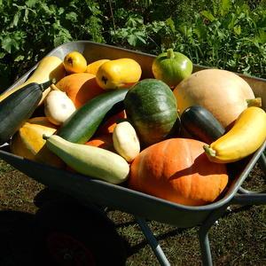 Разноцветный урожай