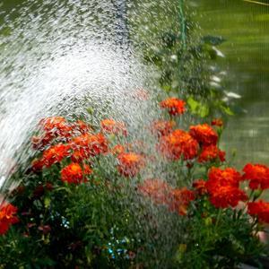 В жаркий солнечный денек освежиться душ помог