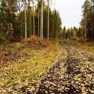 Усыпаны листвой дорожки