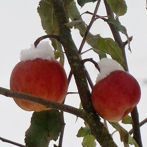 Яблочное мороженое