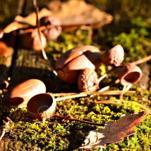 Осенний колорит
